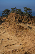 Cliff Lee Framed Prints - Broken Hill Torrey Pines 1 Framed Print by Lee Kirchhevel