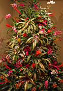 Holiday Decoration Prints - Bromeliad and Orchid Tree Print by Suzanne Gaff
