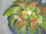 Bromeliad Originals - Bromeliad - Potted by Grace McKee
