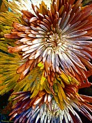 Michelle Frizzell-Thompson - Bronze Fuji Spider Mum