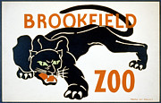 Wild Cat Poster Posters - Brookfield Zoo  Poster by Christopher DeNoon