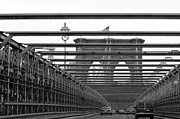 Brooklyn Bridge Prints - Brooklyn Bridge in Black and White Print by Anahi DeCanio