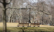 Park Benches Photo Originals - Brooklyn by Colleen Kozel