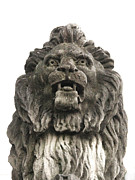 Suzanne Barber - Brooks Lion 2