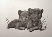 Panther Drawings - Brother And Sisterly Love by Jess Stanley