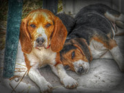 Cute Dogs Digital Art - Brothers by Amanda Eberly-Kudamik