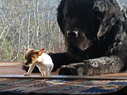 Tiny Dogs Photos - Brothers in claws by Brian Boyle