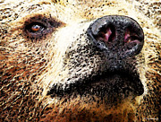 Posters Prints - Brown Bear Art - Nosey Print by Sharon Cummings