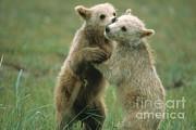 Mark Newman - Brown Bear Cubs