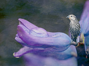 Gardens And Flowers - Brown Bird on a Purple Flower by Crystal Wightman