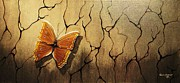 Edwin Alverio - Brown Butterfly