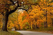 Indiana Autumn Prints - Brown County Foliage 1 Print by Jim McCain