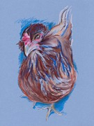 Featured Pastels Posters - Brown Easter Egger Hen Poster by MM Anderson