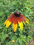 Flower Posters - Brown Eyed Susan Poster by Paul Gioacchini
