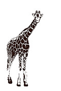 Beauty Balance Design - Brown Giraffe