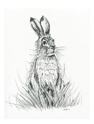 Bunny Art Prints Framed Prints - Brown Hare Study Framed Print by Aura Lesnjak