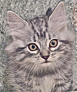 Kitten Prints Posters - Brown Nose  Please read my book Poster by Jim Ellis