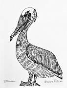Pelican Drawings Metal Prints - Brown Pelican Metal Print by Becky Mason