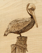 Sea Birds Pyrography Framed Prints - Brown Pelican Framed Print by Danette Smith