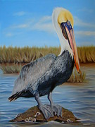 Migratory Bird Painting Framed Prints - Brown Pelican In Marsh Framed Print by Phyllis Beiser