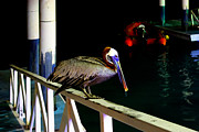 Al Bourassa - Brown Pelican In The...