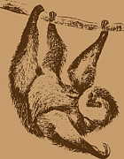 Sloth Drawings - Brown Sloth by