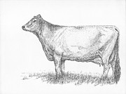 Swiss Drawings - Brown Swiss Dairy Cow by J E Vincent
