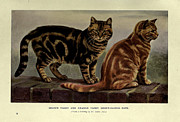 Pussy Framed Prints - Brown Tabby and Orange Tabby Cats Framed Print by W Luker