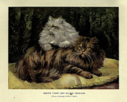 Persian Illustration Framed Prints - Brown Tabby and Silver Persian Framed Print by F Marks