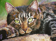 Brown Tabby Posters - Brown Tabby Relaxing Poster by Mary Jo  Zorad