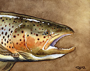 Fly Fishing Art Print Posters - Brown Trout Poster by David Rogers