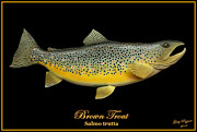 Trout Mixed Media Prints - Brown Trout Print by Greg Pezzoni