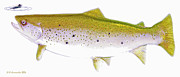 Angling Digital Art - Brown Trout Rises to the Fly Digital Art by A Gurmankin