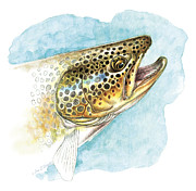 Rainbow Trout Metal Prints - Brown Trout Study Metal Print by JQ Licensing