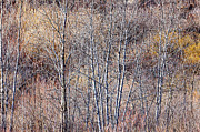 Muted Photo Prints - Brown winter forest with bare trees Print by Elena Elisseeva