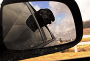 Dog Photo Originals - Bruce Out For A Ride by Charlie Spear