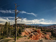 Jeff Burton Metal Prints - Bryce Canyon IV Metal Print by Jeff Burton