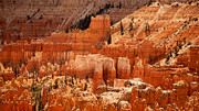 Dry Point Posters - Bryce Canyon landscape Poster by Jane Rix