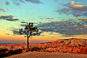 Bryce Canyon Print by Leslie Kirk