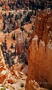 Bryce Canyon National Park 2 Print by Thomas Woolworth