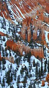 Naturelle Prints - Bryce Canyon Series Nbr 22 Print by Scott Cameron