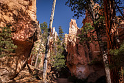 Countryside Posters - Bryce Canyon Trail Poster by Michael J Bauer