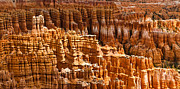 Hoodoo Framed Prints - Bryce Hoodoos Framed Print by Adam Pender