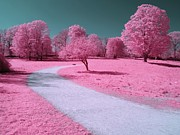 Walk Paths Art - Bubblegum Bliss by Luke Moore