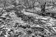 Steve Purnell - Bubbling Water 2 Mono