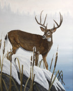 Snow Scene Painting Originals - Buck At Waters Edge by Johanna Lerwick