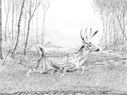 Carl Genovese - Buck