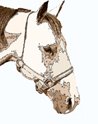 Horse Drawing Digital Art Posters - Buck  Poster by John Horne