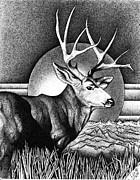 Brian Gilna - Buck Mule Deer