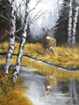 Whitetail Deer Originals - Buck Reflection by Johanna Lerwick